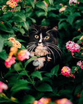 Pionowe ujęcie uroczego puszystego kota chowającego się za roślinami