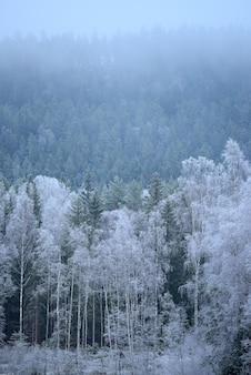 Pionowe ujęcie wspaniałej zimowej przyrody