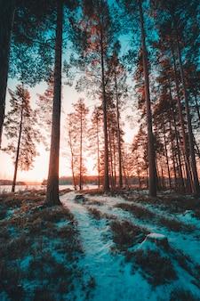 Pionowe ujęcie wysokich drzew na wzgórzu pokryte śniegiem zrobione w szwecji