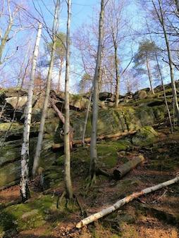 Pionowe ujęcie wzgórza pokrytego omszałymi kamieniami i drzewami w jeleniej górze.