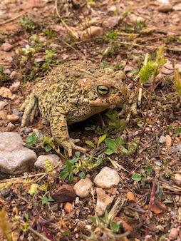 Pionowe ujęcie żaby