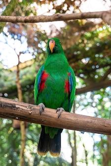 Pionowe ujęcie zielonej papugi siedzącej na gałęzi drzewa