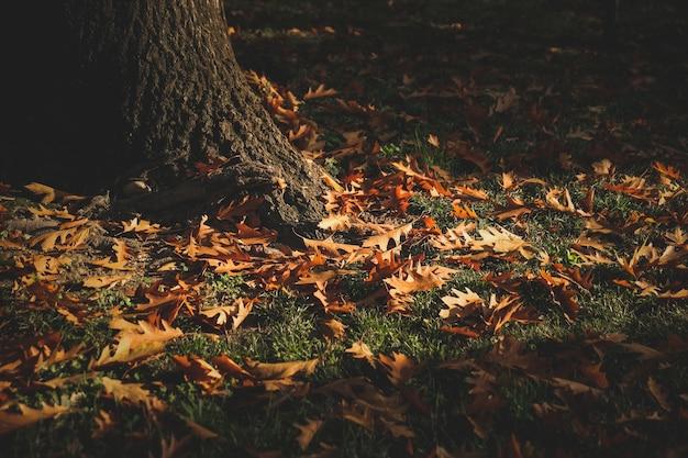 Pionowe ujęcie złotych liści na ziemi w pobliżu drzewa jesienią