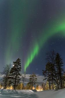 Pionowe wielokolorowe zorze polarne nad lasem