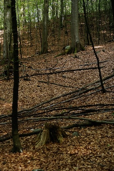 Pionowe wysoki kąt strzału kawałków drewna spadł na ziemię z suchymi liśćmi w lesie