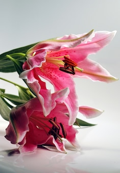 """Pionowe zbliżenie lilii """"stargazers"""" na stole"""