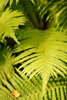 Pionowe zbliżenie liści drzewa uchwyconego w lesie wood