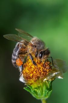 Pionowe zbliżenie pszczoły na kwiatek