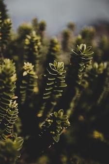 Pionowe zbliżenie selektywne ujęcie ostrości zielonych roślin - idealne dla telefonów komórkowych