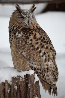 Pionowe zbliżenie sowa rogata stojącego na drewnie podczas opadów śniegu