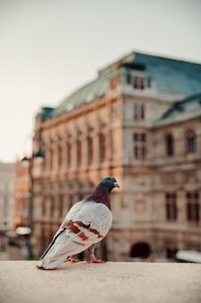 Pionowe zbliżenie strzał gołębia zapasów z budynkami