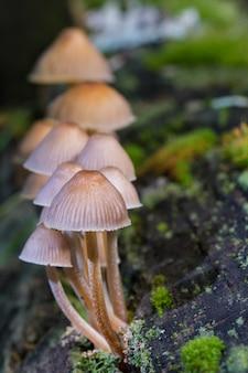 Pionowe zbliżenie strzał grzybów w lesie