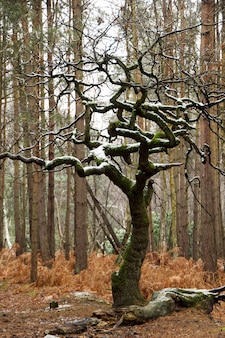 Pionowe zbliżenie strzał nagie drzewo pokryte mchem i śniegiem w lesie