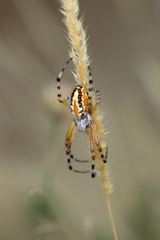 Pionowe zbliżenie strzał pająka na roślinie