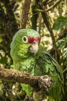 Pionowe zbliżenie strzał papużki w lesie stojących na gałęzi drzewa