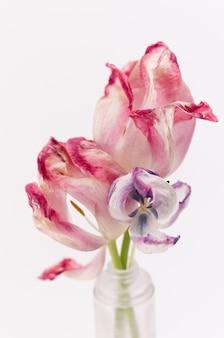 Pionowe zbliżenie strzał piękne różowe tulipany na białym tle