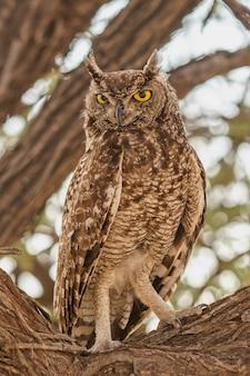 Pionowe zbliżenie strzał sowy siedzącej na gałęzi drzewa z niewyraźnym