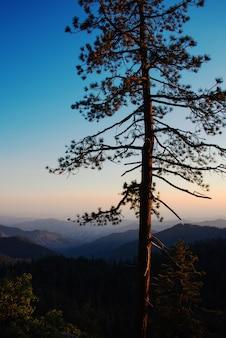 Pionowe zbliżenie strzał starego samotnego drzewa z górami i krystalicznie czystym niebem