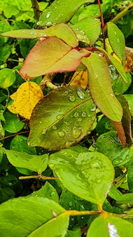 Pionowe zbliżenie strzał świeżej zielonej rośliny z kropli wody na nim