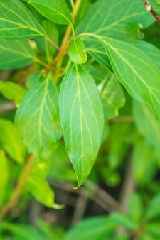 Pionowe zbliżenie strzał zielonych liści krzewu