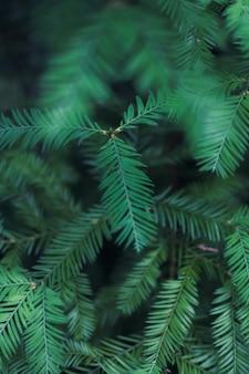 Pionowe zbliżenie strzał zielonych liści paproci
