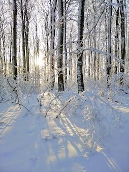 Pionowe zdjęcie drzew pokrytych śniegiem w lesie nasłonecznionym w larvik w norwegii