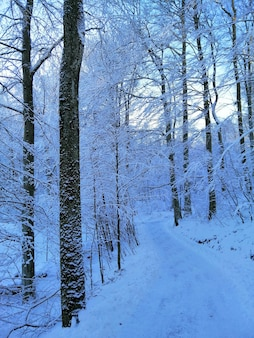 Pionowe zdjęcie drzew w lesie pokrytym śniegiem w larvik w norwegii