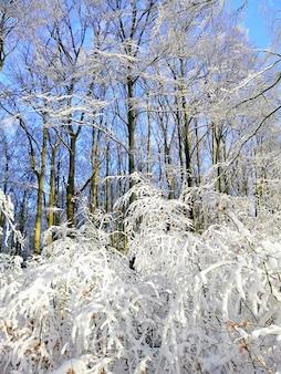 Pionowe zdjęcie drzew w lesie pokrytym śniegiem w słońcu w larvik w norwegii