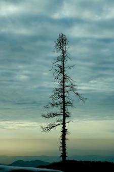 Pionowe zdjęcie drzewa