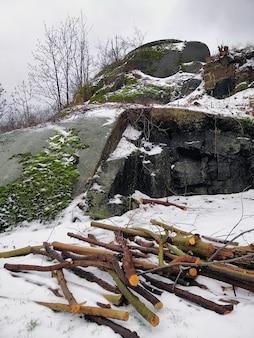 Pionowe zdjęcie gałęzi drzew i skał pokrytych mchami i śniegiem w larvik w norwegii