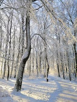 Pionowe zdjęcie lasu otoczonego drzewami i skałami pokrytymi śniegiem w słońcu