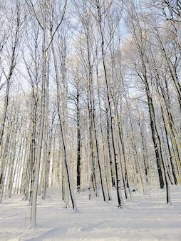 Pionowe zdjęcie lasu otoczonego drzewami pokrytymi śniegiem w słońcu w norwegii