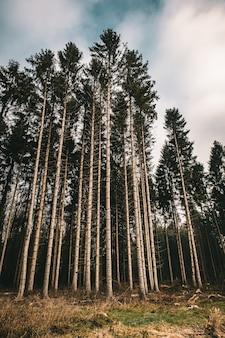 Pionowe zdjęcie lasu otoczonego liśćmi i wysokimi drzewami pod zachmurzonym niebem