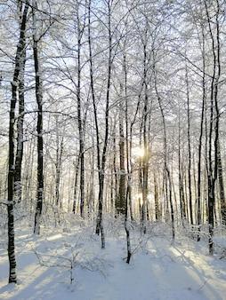 Pionowe zdjęcie lasu pokrytego drzewami i śniegiem w słońcu w larvik w norwegii