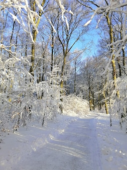 Pionowe zdjęcie ścieżki w lesie otoczonym drzewami pokrytymi śniegiem w norwegii