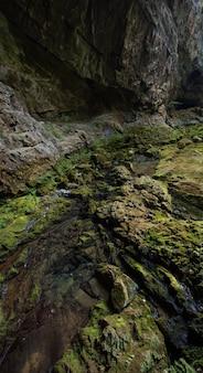 Pionowo wysokiego kąta strzał skały zakrywać z mech chwytającym w skrad, chorwacja
