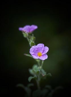 Pionowo zbliżenie strzał piękny purpurowy kwiat z zamazanym