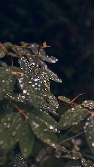 Pionowo zbliżenie zieleni liście zakrywający z dewdrops