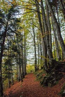 Pionowy obraz niezakłóconych liści na szlaku przez las z mężczyzną budzącym się w oddali