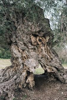 Pionowy obraz starej kory drzewa na polu otoczonym zielenią