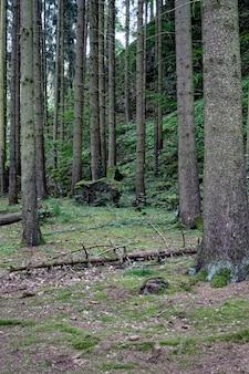 Pionowy obraz ustawionych drzew w lesie