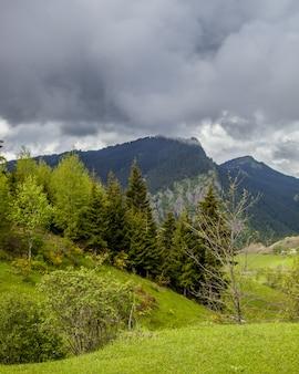 Pionowy obraz wzgórz pokrytych lasami i mgłą pod zachmurzonym niebem