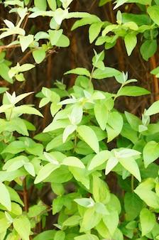 Pionowy obraz zielonych liści na roślinach