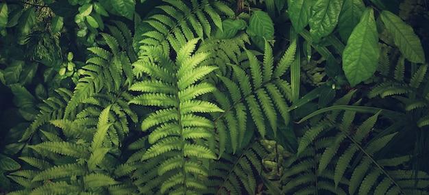 Pionowy ogród z tropikalnymi zielonymi liśćmi, kontrast