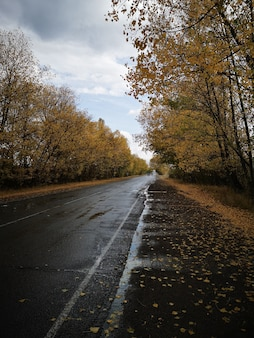 Pionowy widok mokrej drogi z drzewami po bokach pod zachmurzonym niebem