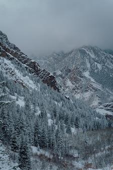 Pionowy wysoki kąt strzału lasu świerkowego w zaśnieżonych górach pod ciemnoszarym niebem