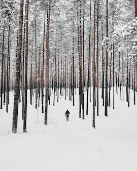 Pionowy wysoki kąt strzału osoby idącej w zaśnieżonym lesie z wysokimi drzewami