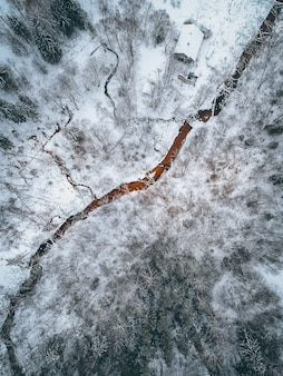 Pionowy wysoki kąt strzału pokrytego śniegiem krajobrazu z dużą ilością bezlistnych drzew
