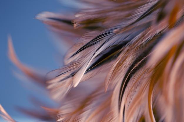 Pióra kurczaka w miękkich i rozmytych stylizują tło