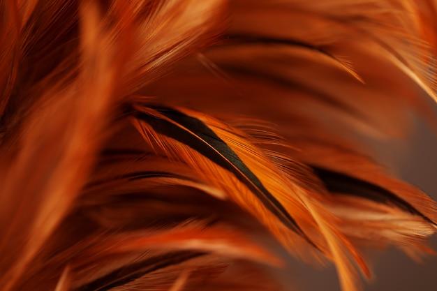 Pióra kurczaka w miękkim i rozmytym stylu na tle, sztuka abstrakcyjna